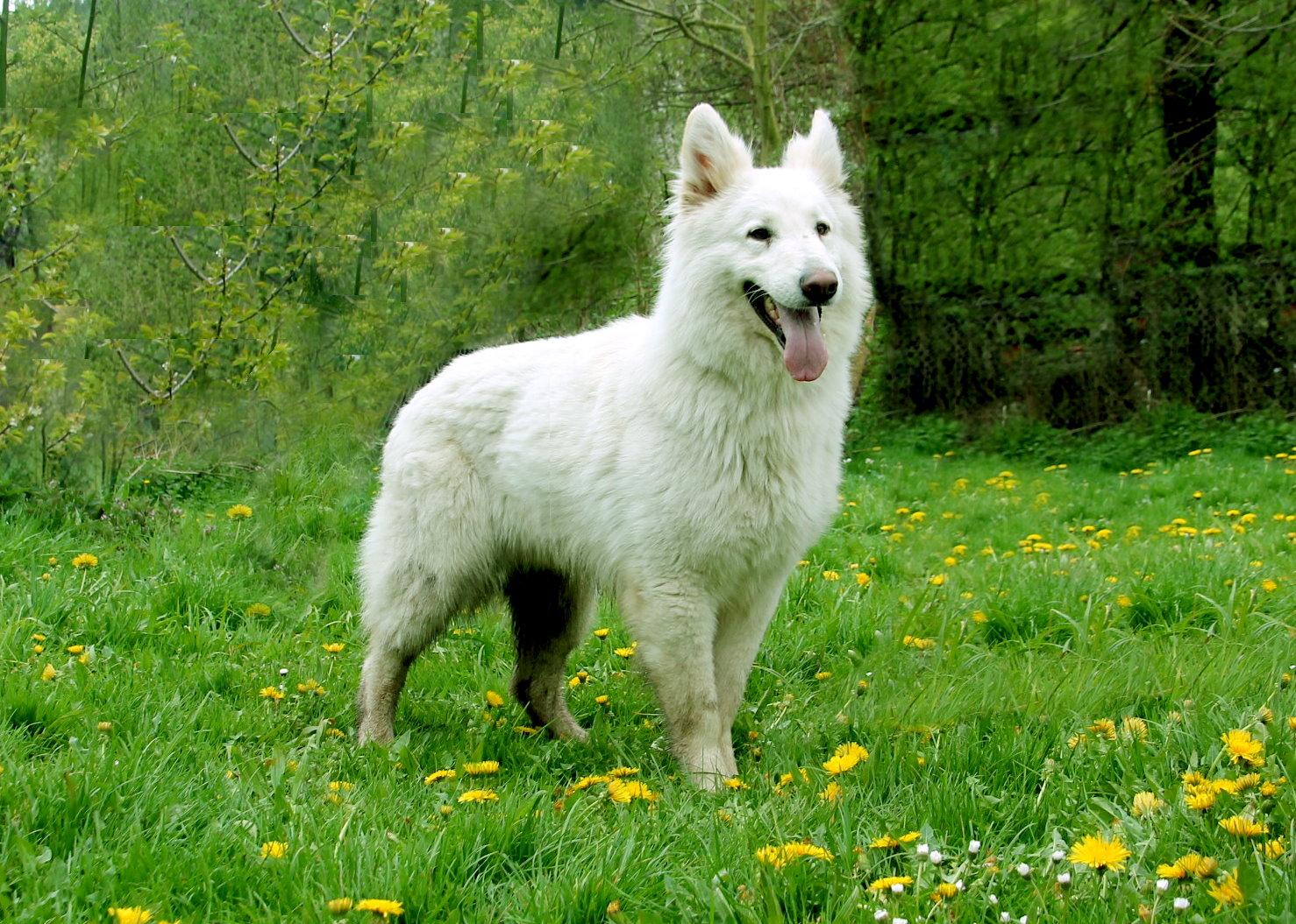 Deamon Zeichen von Wolf